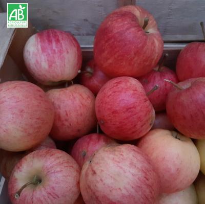 pommes bio Fuji
