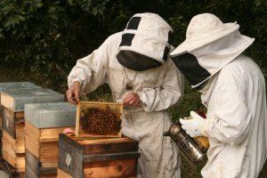 Hors Cadre miels bio