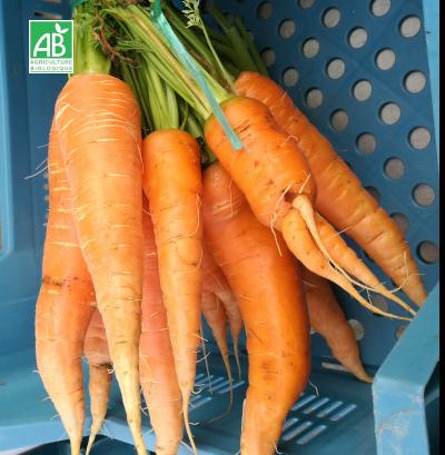 Carotte bio primeur orange