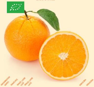 Oranges Bio bioespuna
