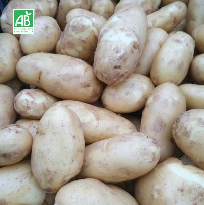 Pommes-de-terre-nouvelles-bio