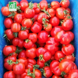 Tomates-des-glacier-bio