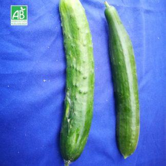 Concombre-vert-et-noa-bio