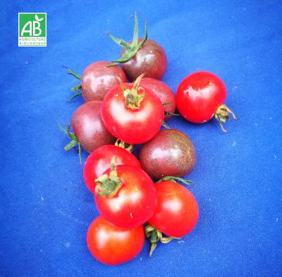 Tomates-cerises-bio-rouges-et-noires