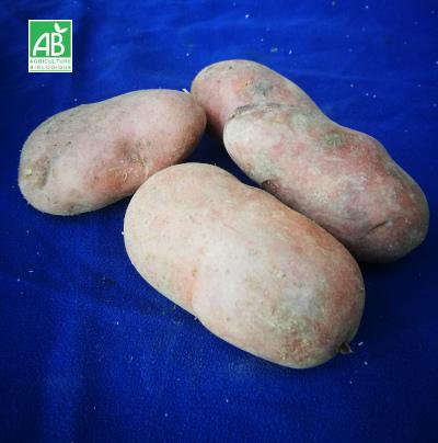pomme-de-terre-DESIREE-bio