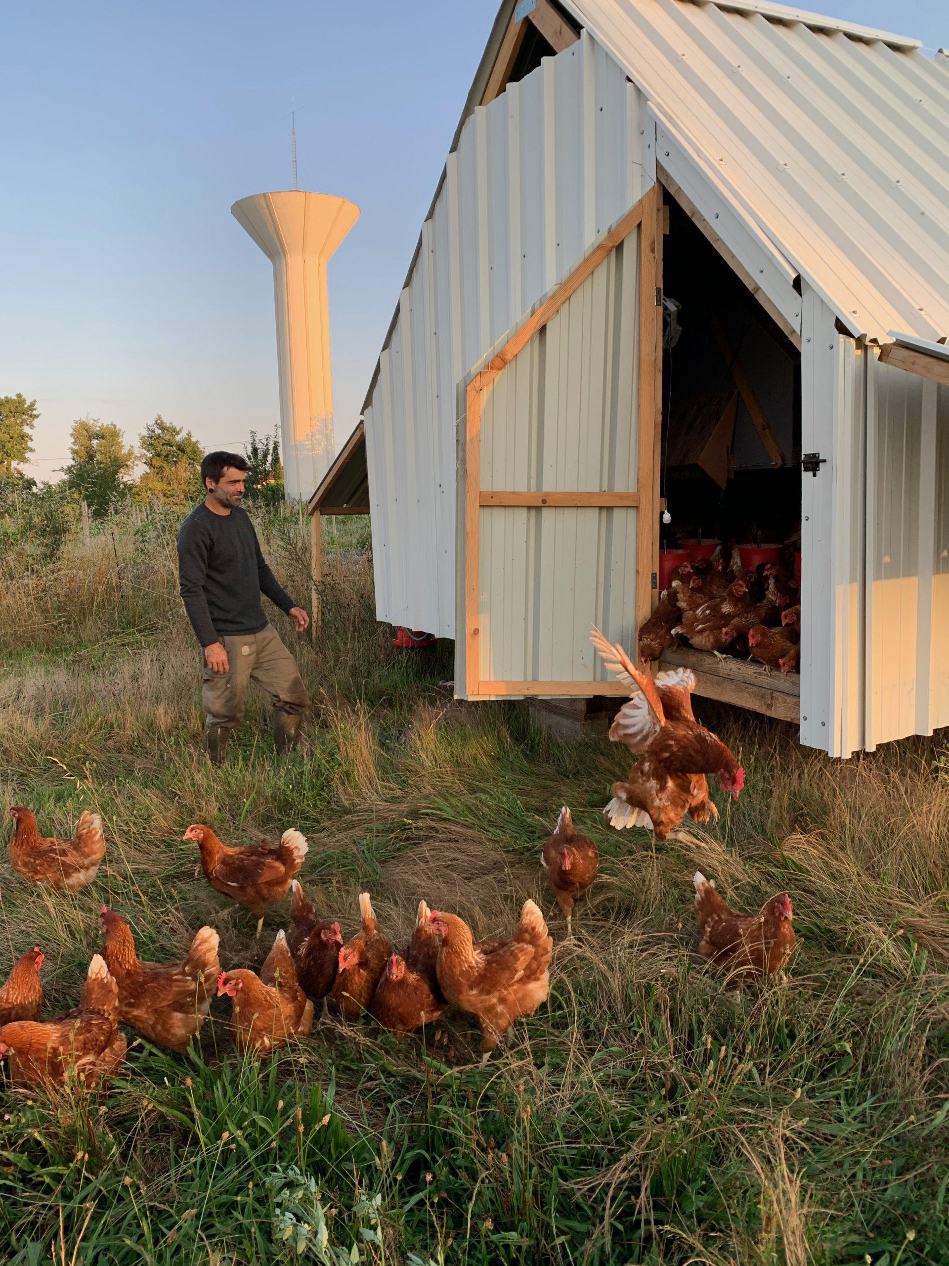 ferme des Margalides oeufs et volailles bio
